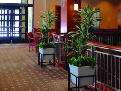 Susie's Tropical Interiors LLC