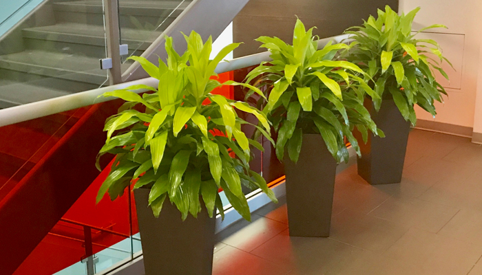 interior-plant-design